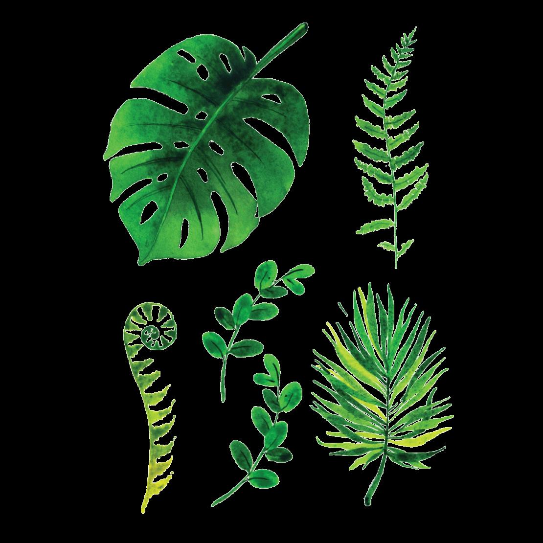 Временная тату набор Зеленого Листья