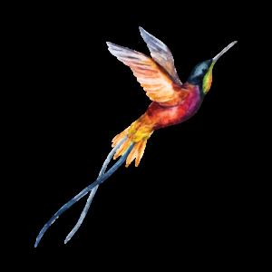 Временная татуировка колибри