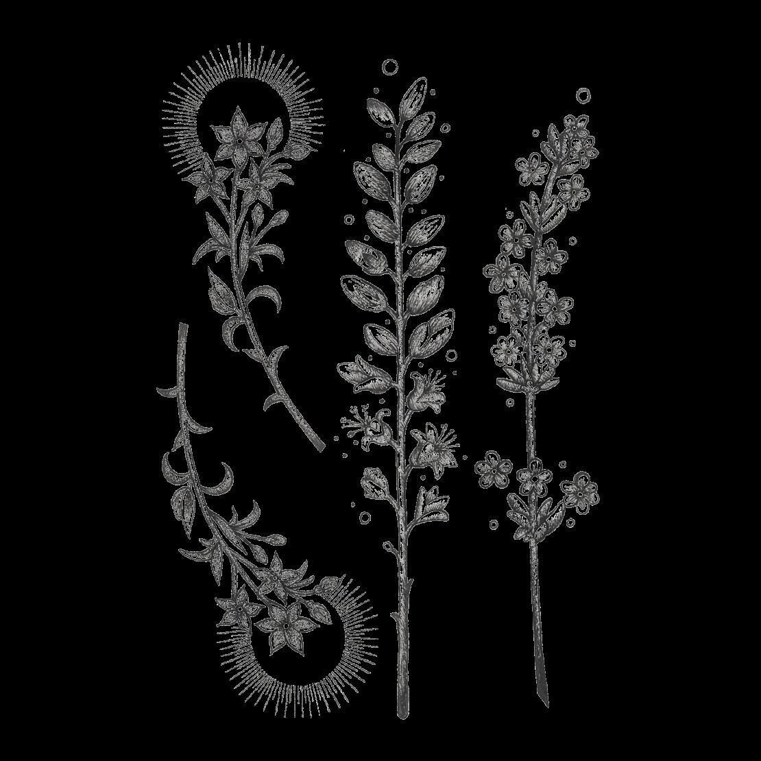 Временное тату набор растений